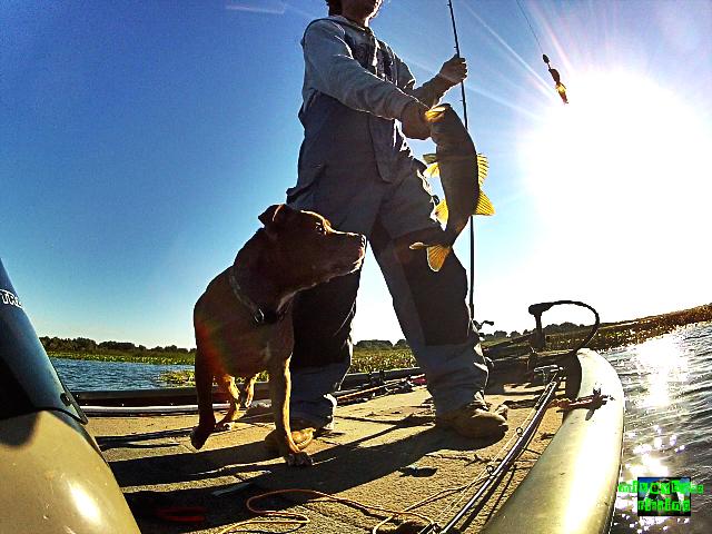 bass fishing lake kissimmeee
